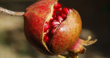 Antioxidantes. Sabes lo que son?